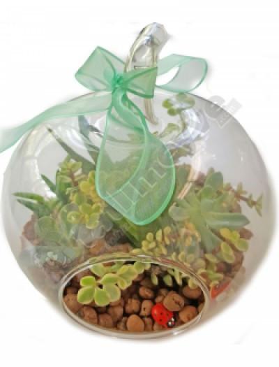 Elma cam içinde 5 succulentli teraryum