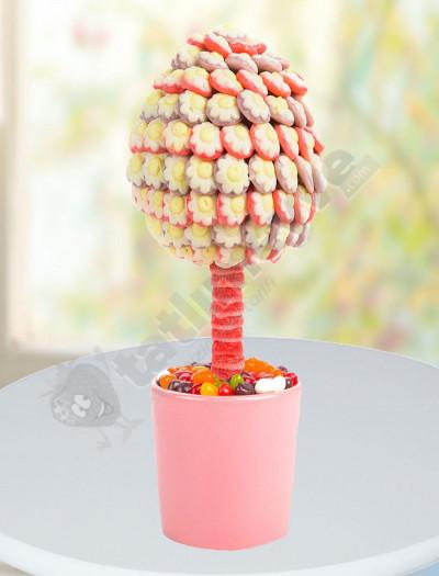 Şeker Papatya Ağacı
